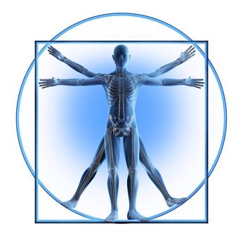 Anatomiestudio Da Vinci 2
